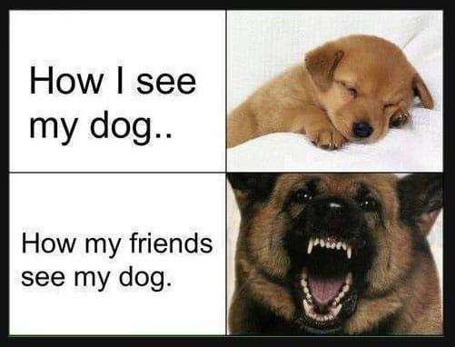 how-i-see-my-dog
