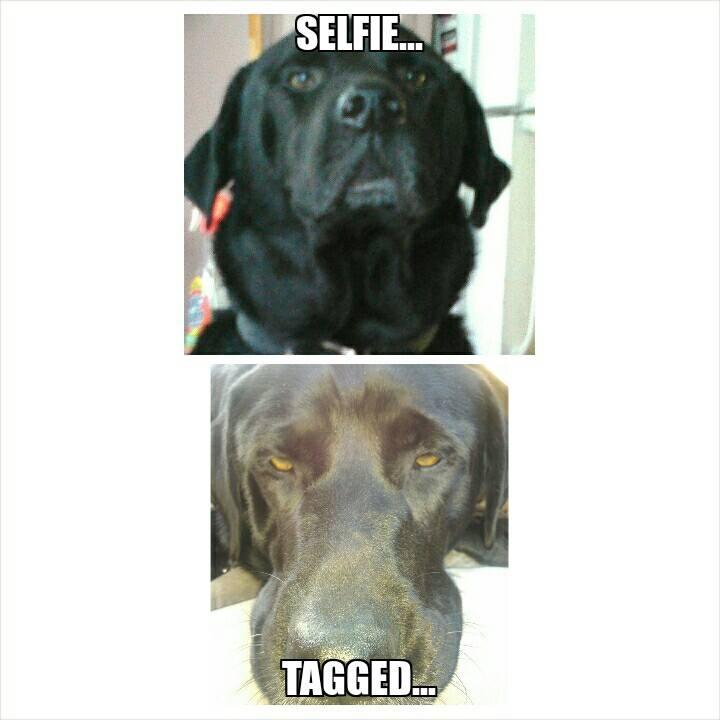 selfie-vs-tagged