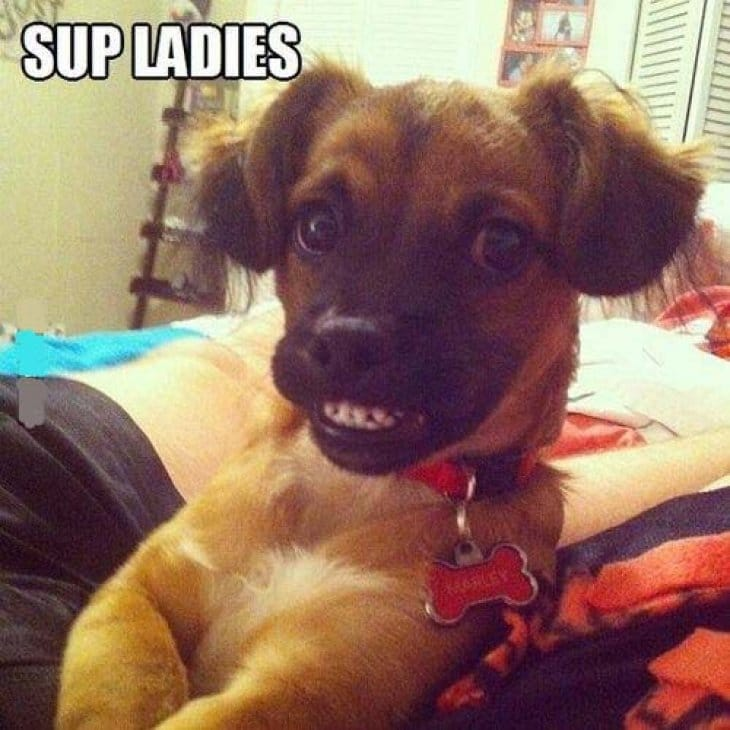 sup-ladies