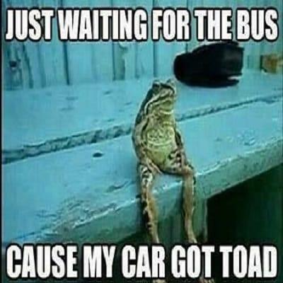 car-got-toad