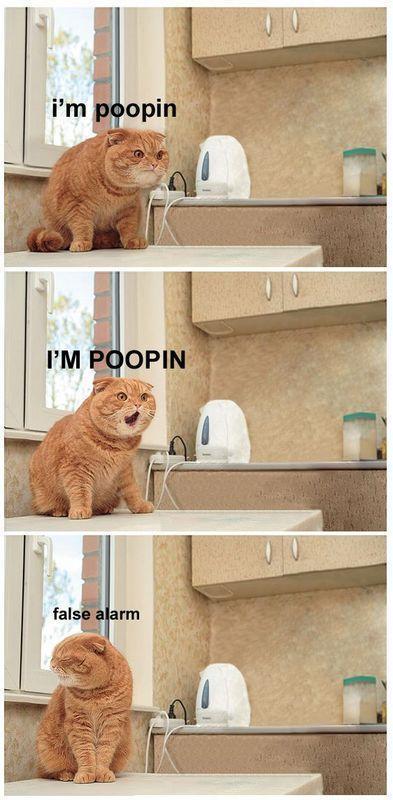im-poopin