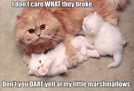 mama-cat-be-like