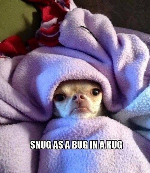 snug-as-a-bug-in-a-rug
