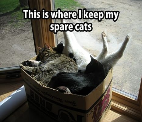spare-cats
