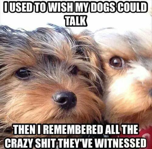used-to-wish-my-dogs-could-talk