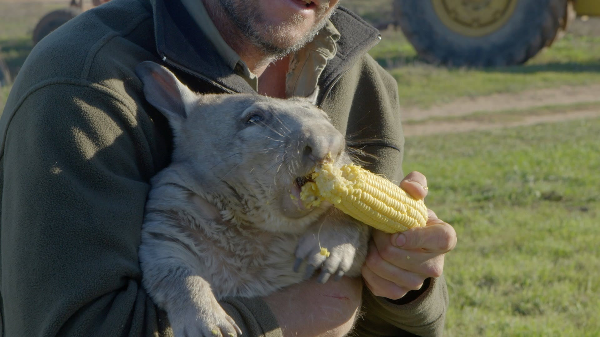 Cat Eating Corn Dog