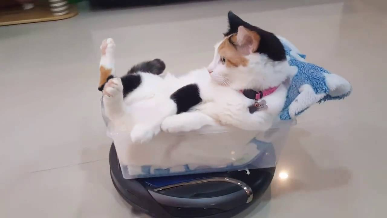 Just A Cat Riding A Roomba In Style Viral Viral Videos