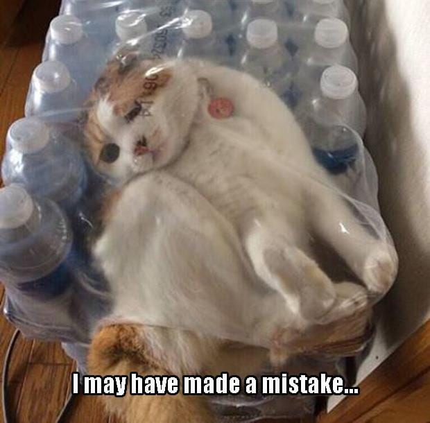 Meme Cats Make Big Mistake With Plastic Viral Viral Videos