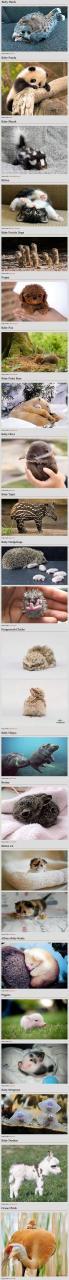 funny-cute-baby-animals-meme-jokes