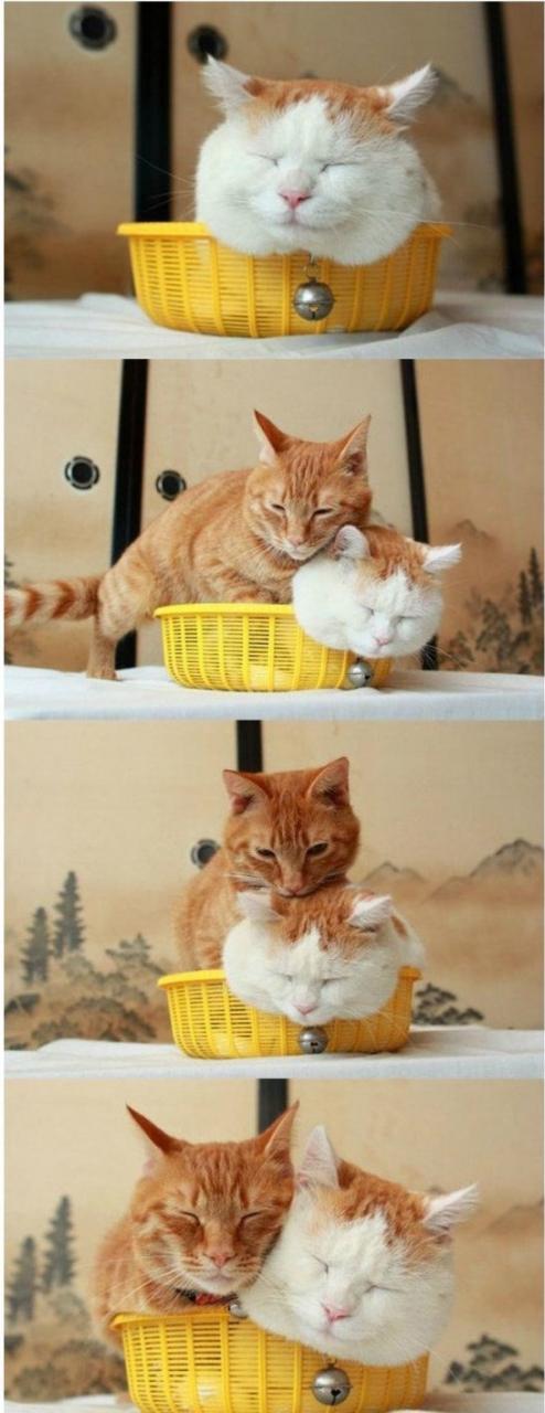 funny-cute-cats-meme