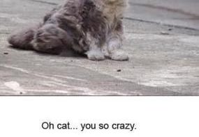 funny-dead-cat-jokes-funny-pictures-meme