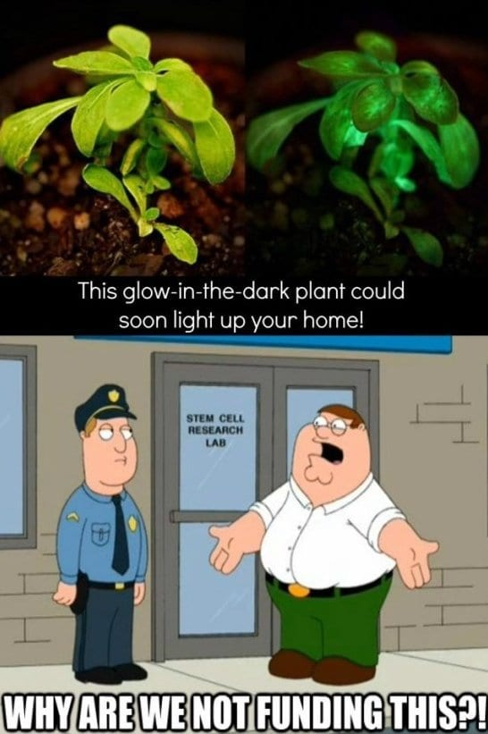 funny-pics-glow-in-the-dark-plant-meme