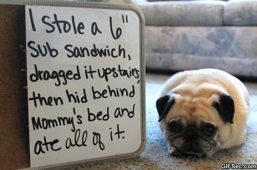 funny-pictures-pug-shaming