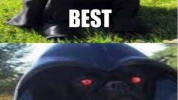 i-should-join-the-dark-side-funny-meme-gif