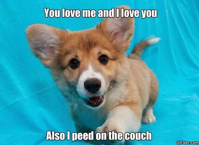 meme-cute-puppy
