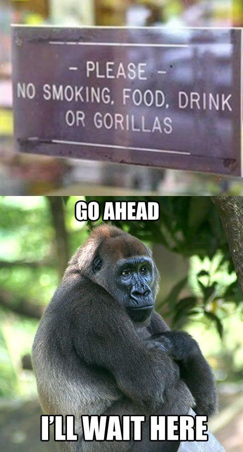 no-smoking-food-drinks-or-gorillas