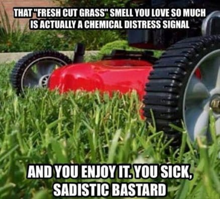 that-fresh-cut-grass-smell