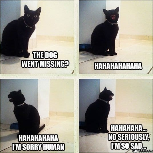 funny-sad-cat