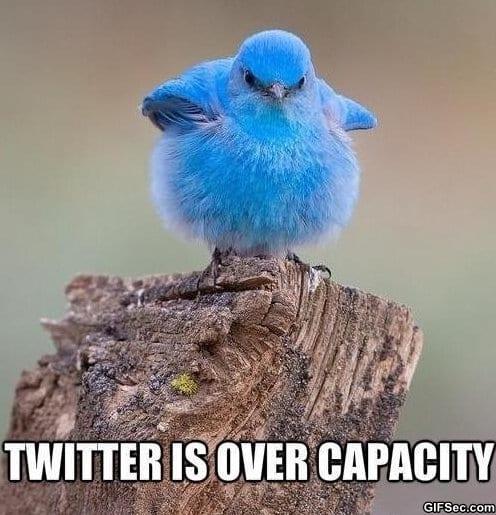 meme-twitter-is-overloaded