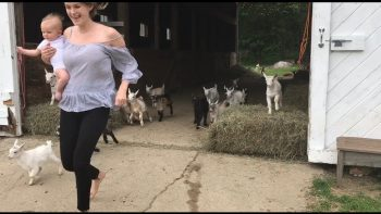 The Running Of The Goats