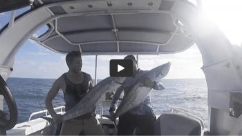 Boat Capsizes Whale Breaches