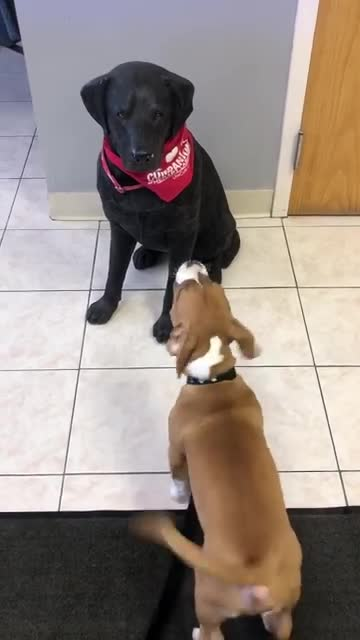 puppy tries to play with dog statue