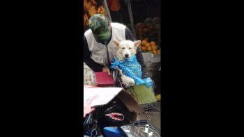 elderly man shields dog from rain video