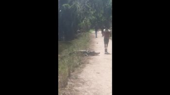 jogger almost hits alligator