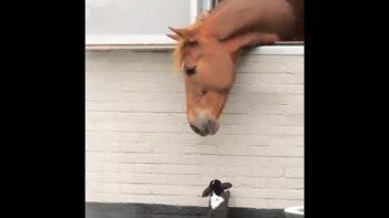 Horse Befriends Rabbits In Incredible Footage