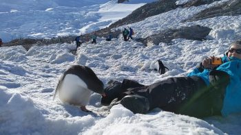 Antarctic Selfie with a Baby Gentoo Penguin