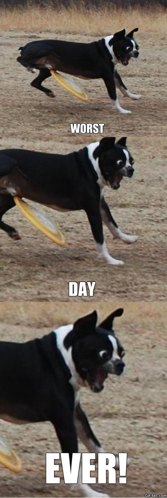bad-luck-dog-meme-funny-pictures