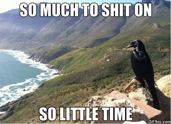 bird-problems-meme-funny-pictures