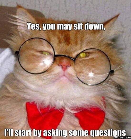 cat-interview-meme-funny-pictures