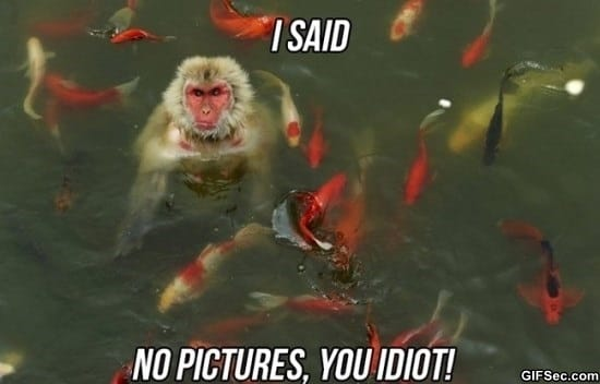 no-pictures-meme-funny-pictures