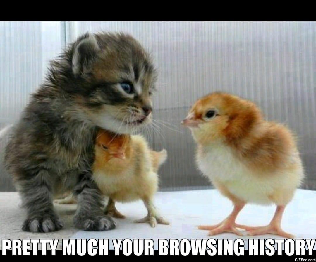 guys-browsing-history