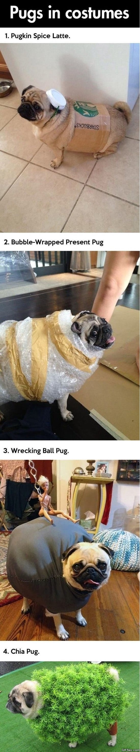 pugs-in-costumes