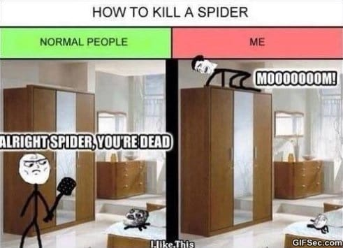 how-to-kill-a-spider