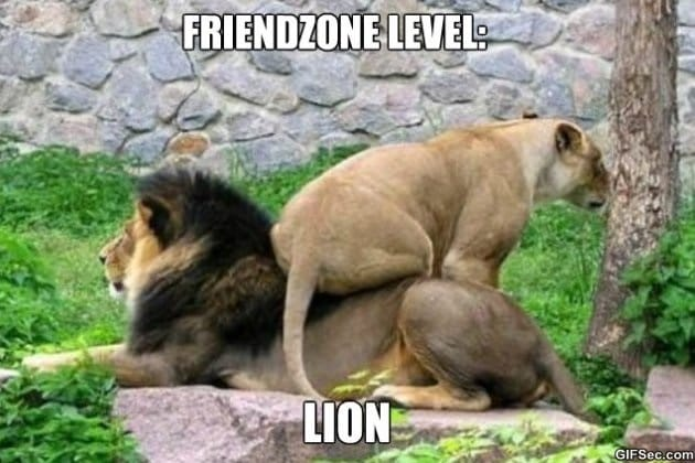poor-lion