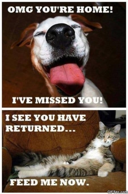 Cats vs. Dogs   Funny Pictures
