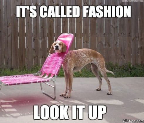 fashion-dog-funny-pictures