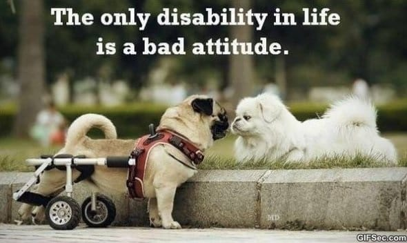 bad-attitude-funny-pictures