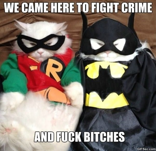 funny-cats-to-the-rescue-memes