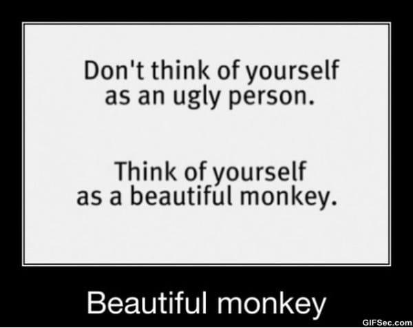 funny-monkey-memes