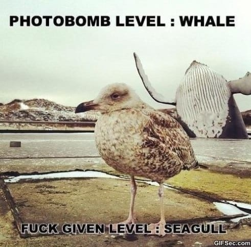 photobomb-funny-pictures