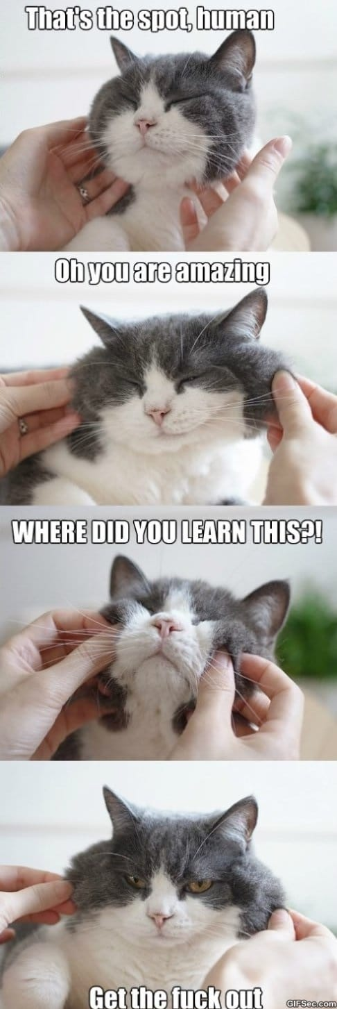 typical-cats-funny-pictures