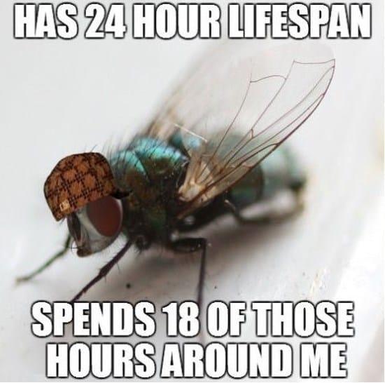 scumbag-fly