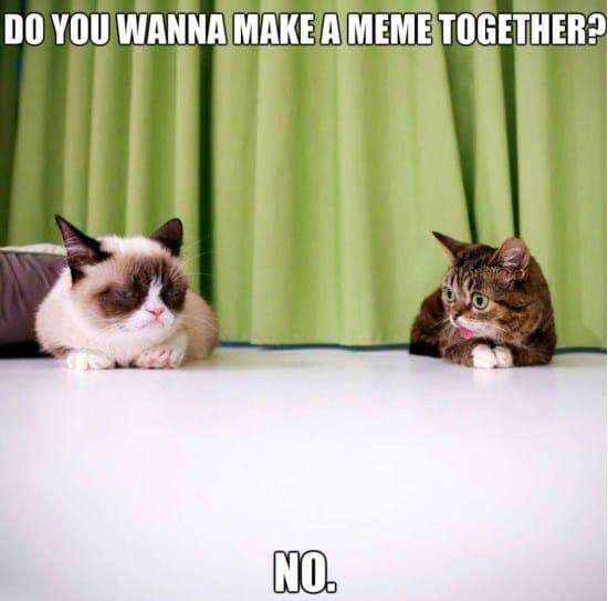 lil-bub-and-grumpy-cat