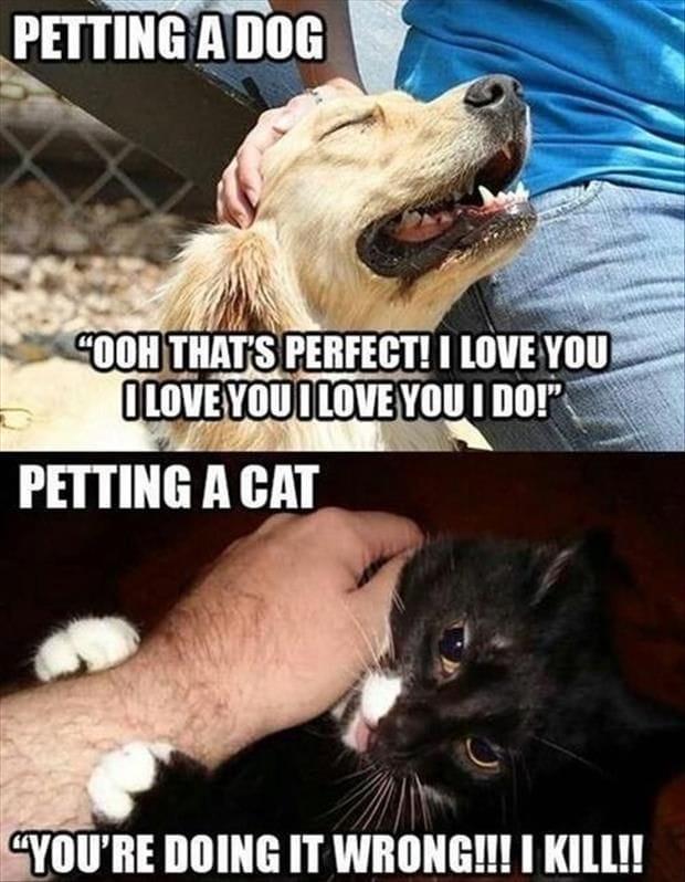 petting-lol