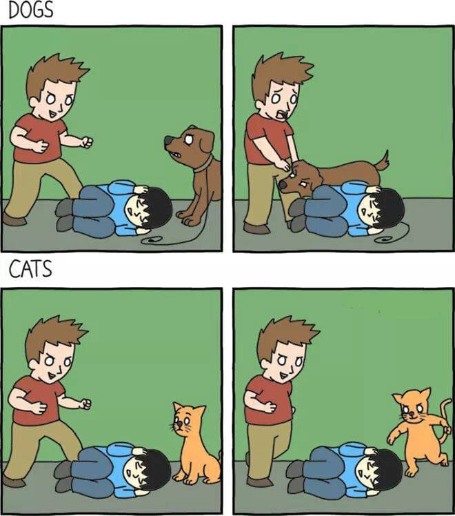 dogs-and-cats-reactions