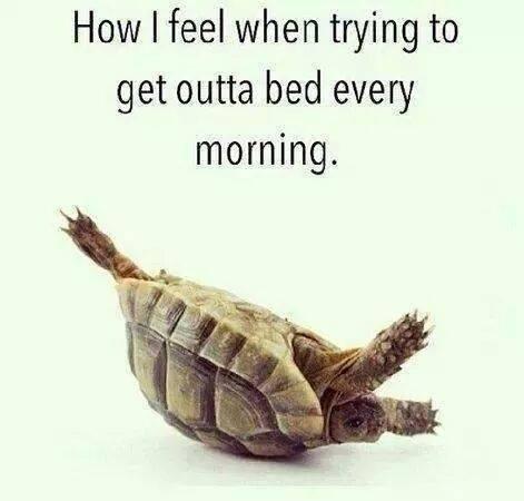 how-i-feel-every-morning